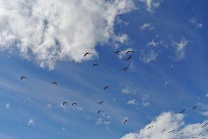 エルカラファテ、観光、チリフラミンゴ、ニメス湖